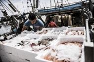 یک نقطه عطف در بهره برداری بیش از حد از ماهیگیری در مدیترانه و دریای سیاه