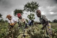 کشورهای آفریقایی متعهد به افزایش اقدامات برای دستیابی به امنیت غذایی هستند
